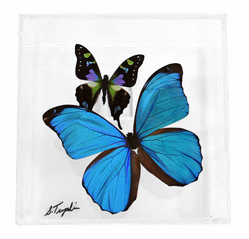 "04 - 6"" X 6"" Square Display With Two Butterflies"