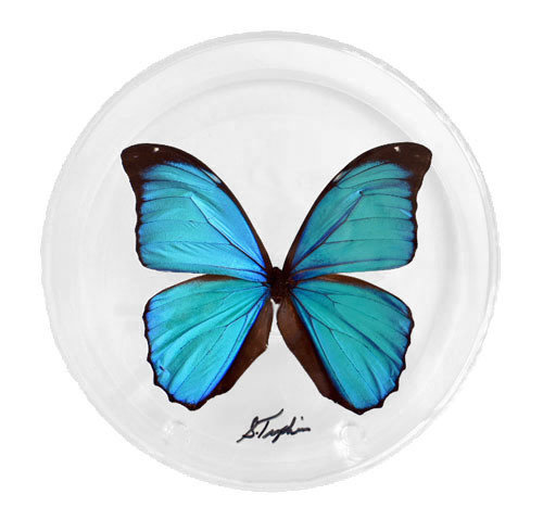 "05 - 6"" Round Display With One Butterfly"