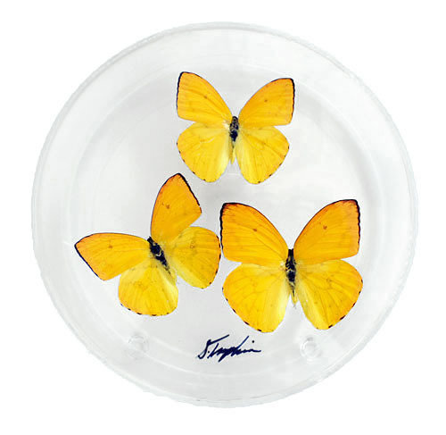 "06 - 6"" Round Display With Three Butterflies"