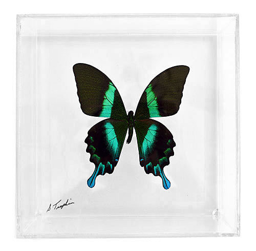 "07 - 7"" X 7"" Square or Diamond Display With Premium Butterfly"