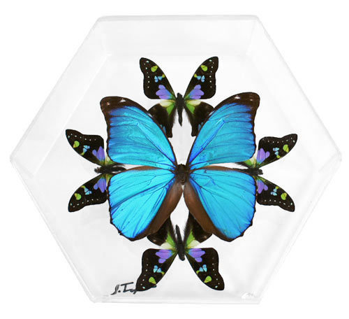 "09 - 8"" X 7"" Hexagonal Butterfly Display"