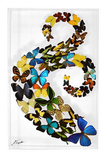 "27 - 18"" X 28"" Butterfly Display Double Swirl"