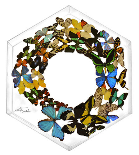"30 - 24"" X 24"" Hexagonal Butterfly Display"