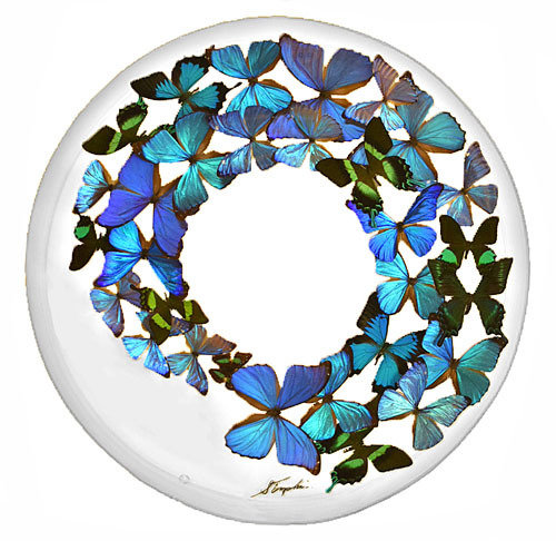 "32 - 24"" Circle Butterfly Display Blue"