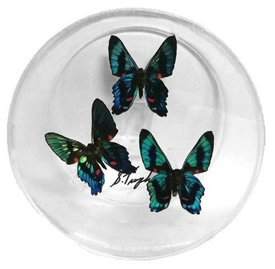 01 - 4x4 Circle Butterfly Display with Three Butterflies