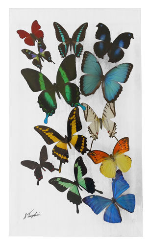 "17 - 10"" X 17"" Butterfly Display"