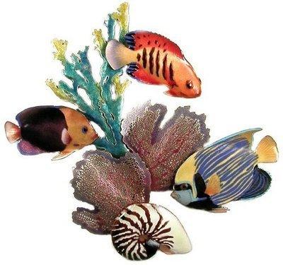 Bovano - Angel Fish Friends