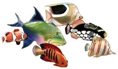 Bovano - 6 Fish Gathering
