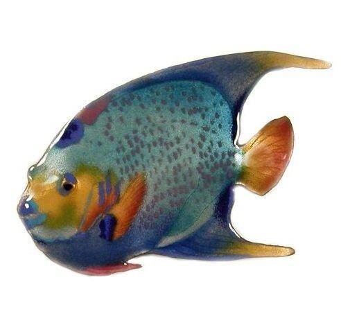 Bovano - Queen Angelfish