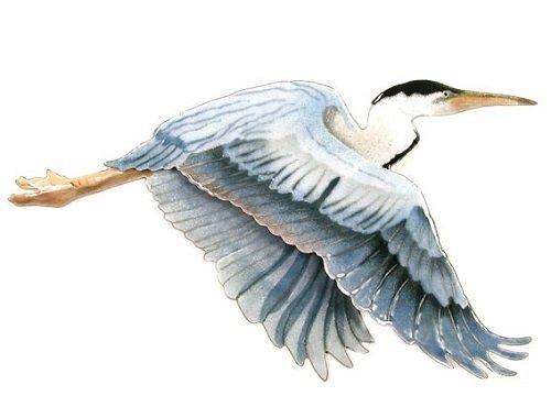 Bovano - Flying Heron