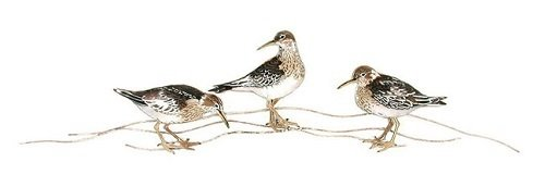Bovano - Three Sandpipers