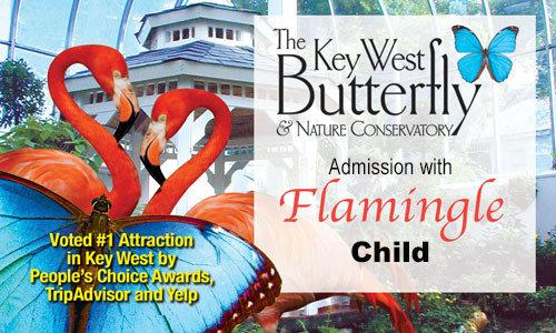 Flamingle - Conservatory Admission (Child 4-13yrs)