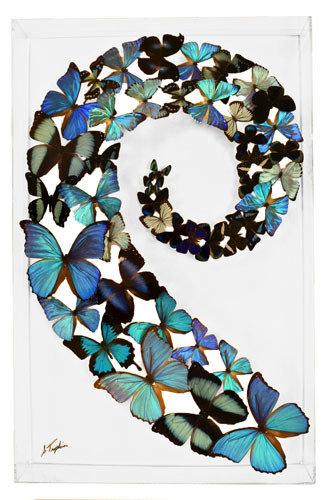 """26 - 18"""" X 28"""" Butterfly Display Swirl Blue"""