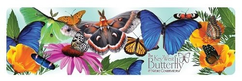 Magnet - Large Butterflies and Flowers