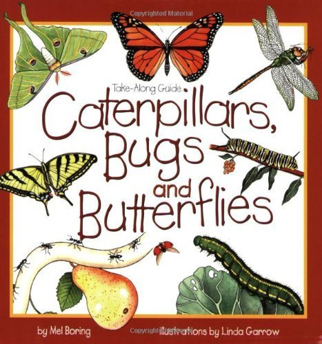 Book - Caterpillars, Bugs and Butterflies