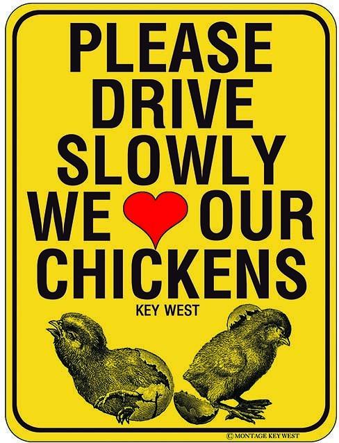 PLEASE DRIVE SLOWLY * 8'' x 11''
