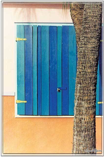 BLUE SHUTTER WITH PALM * 8'' x 11''