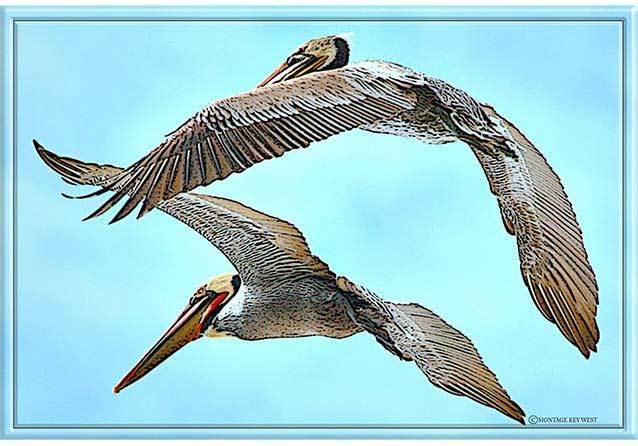 PELICANS FLYING * 7'' x 11'' 10305