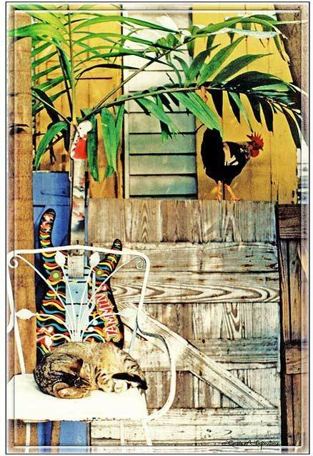 ROOSTER AND CAT * 7'' x 11'' 10307