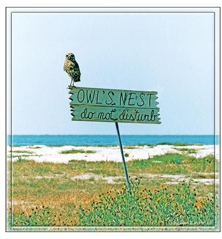 OWL'S NEST * 8'' x 9'' 10538