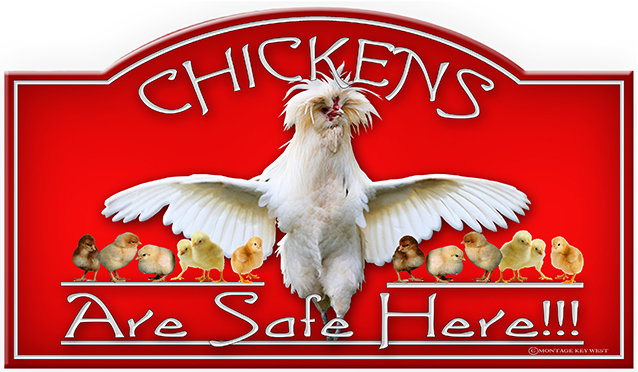 CHICKENS SAFE HERE * 7'' x 11''
