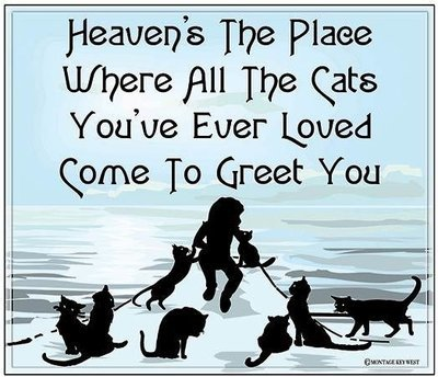 HEAVEN'S THE PLACE WHERE CATS * 8