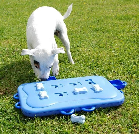 Интеллектуальная игра для собак Казино сложный уровень