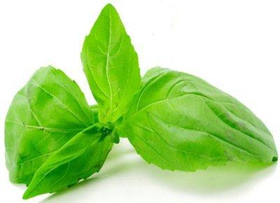 Basil 100% Pure Essential Oil