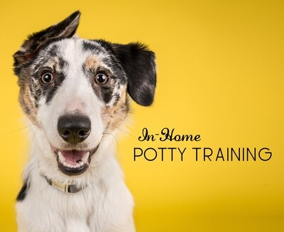 In-Home Potty Training