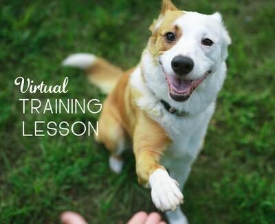Virtual Training Lesson