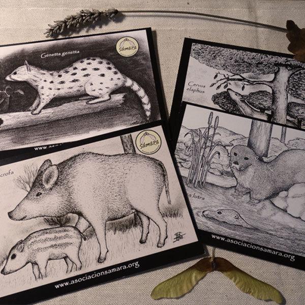 Pack de 4 Postales de fauna 03