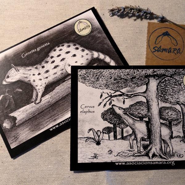 Pack de 4 Postales de fauna