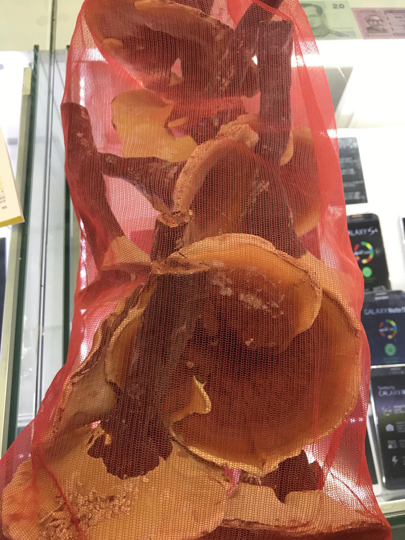Jamur myongji obat darah tinggi