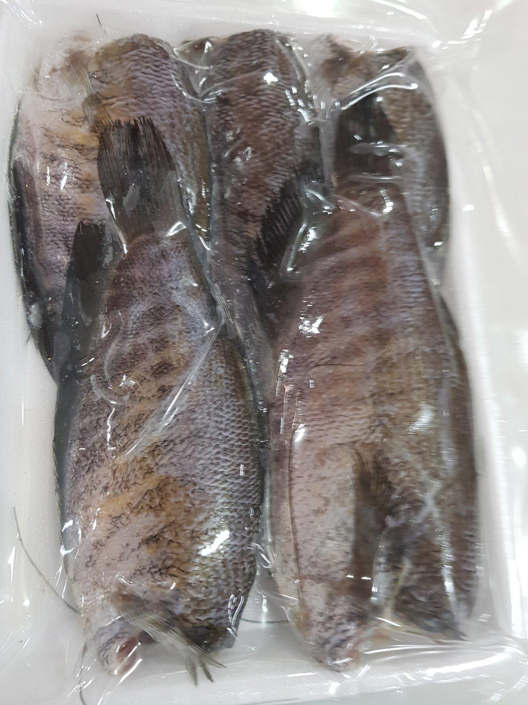 Ikan Sepat (Snakeskin Gourami)