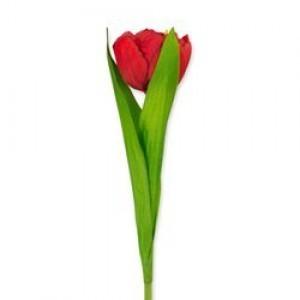 Rode kunst tulp - Huisvaasje