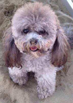 CASA BIONDI DOG