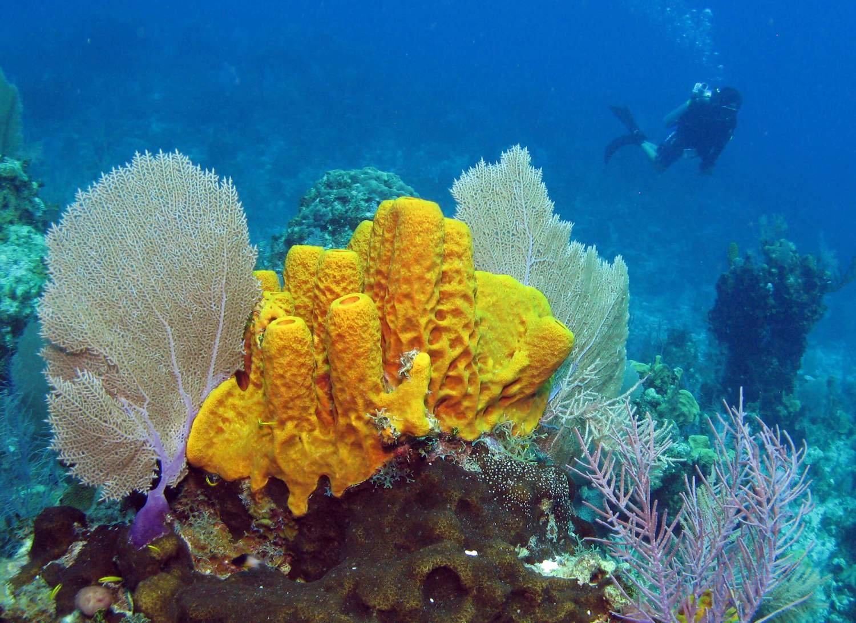 real ocean sponges - 1000×727