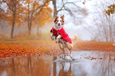 Wasserfeste Regenjacke - Aira Rain Jacket