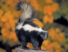 Skunky Odors