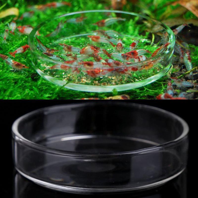 Shrimp Feeding Dish 6cm Glass