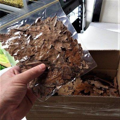 Oak Leaves 10g