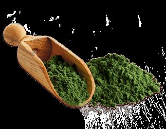 100% Organic Chlorella Powder - 40g (Alger Pulver)