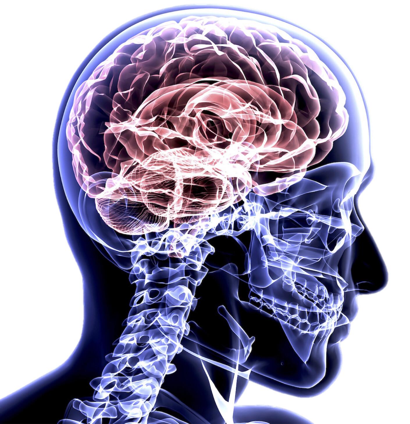 National Undergraduate Neuroanatomy Competition 2020