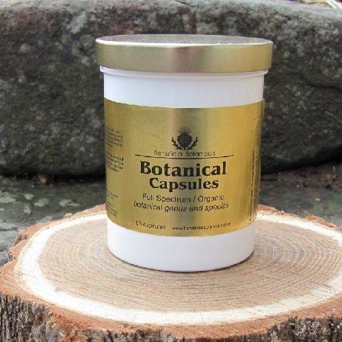 Lomatium Root Capsules C-LOMA-R