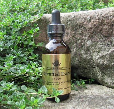 Turkey Tail Mushroom Tincture Dual Extraction