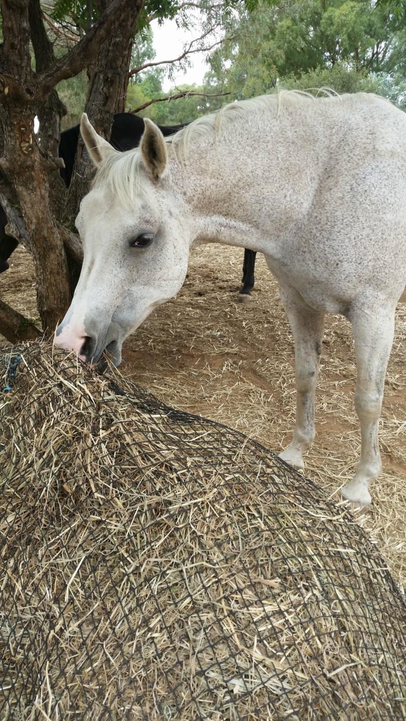 GutzBusta Hay Nets - Discounted Nets!