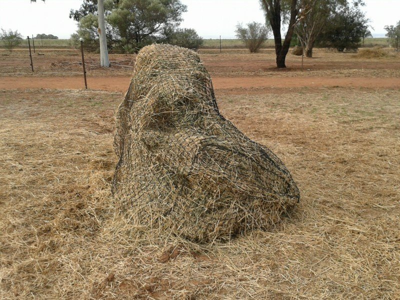 Partially eaten Large Export Bale with GutzBusta Slow Feed Hay Net - no wastage