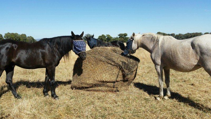 5x4 4cm GutzBusta Round Bale Hay Net in 48ply
