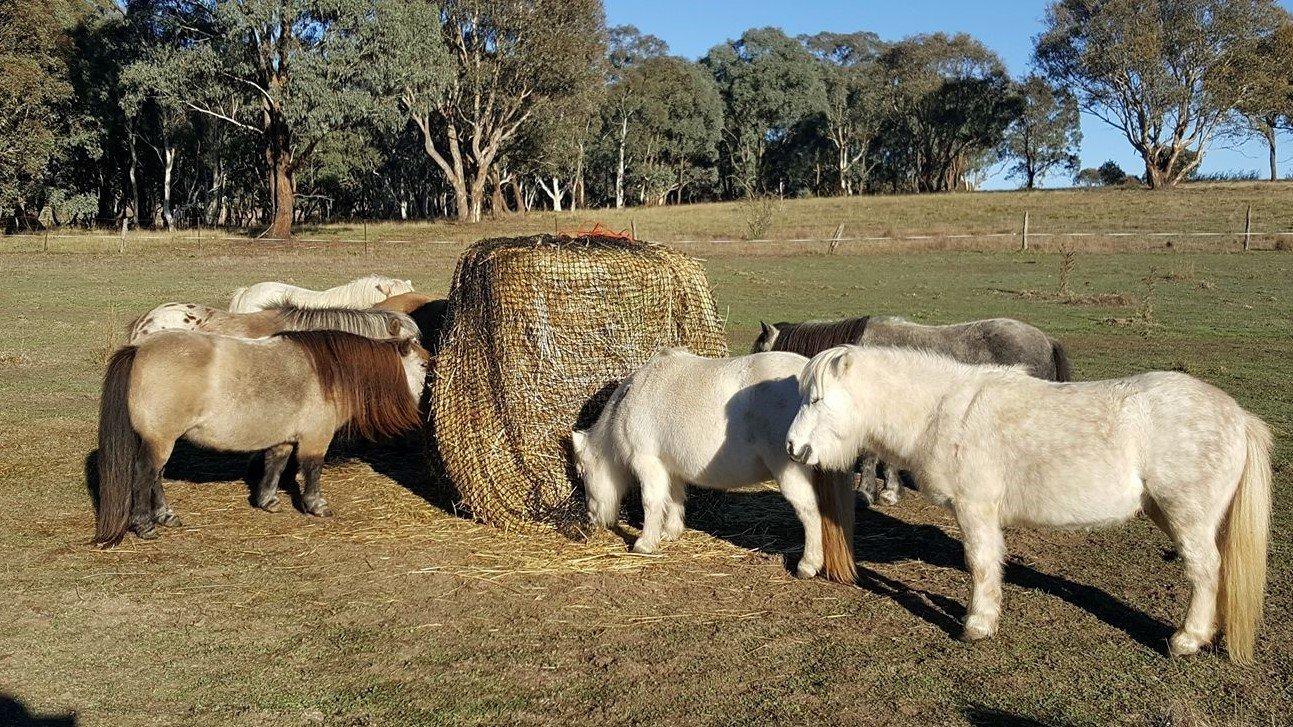 3cm GutzBusta Round Bale Hay Net
