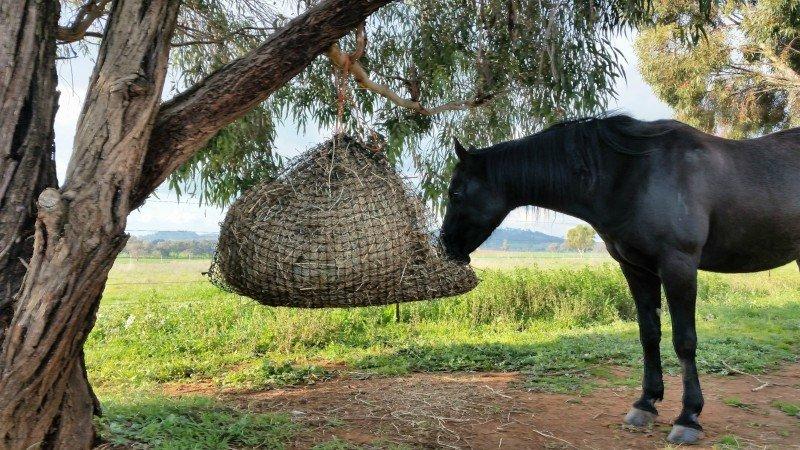 4cm GutzBusta Large Hay Net - 48ply